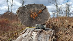 Picture of Elecraft K1 on tree stump.